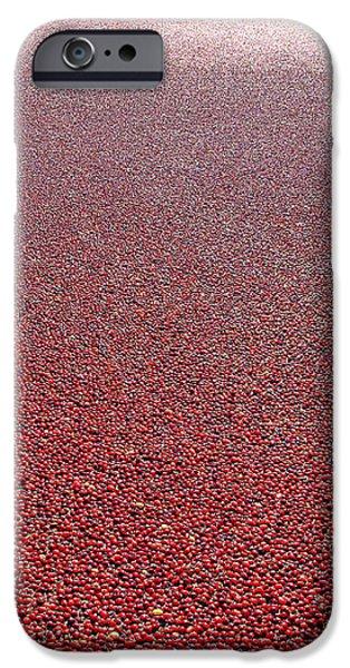 Cranberries iPhone Case by Olivier Le Queinec