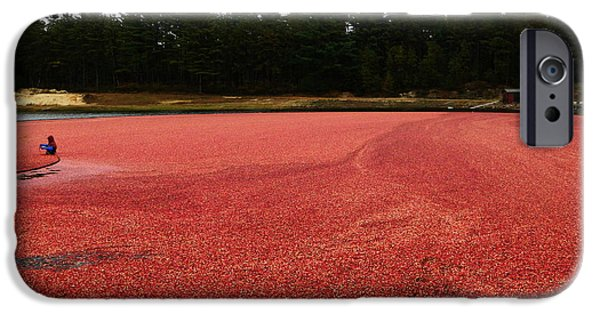 Newengland iPhone Cases - Cranberry Harvest 2 iPhone Case by Andrea Anderegg