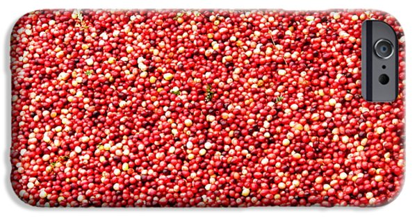 Newengland iPhone Cases - Cranberry Harvest 3 iPhone Case by Andrea Anderegg