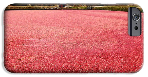Newengland iPhone Cases - Cranberry Harvest 4 iPhone Case by Andrea Anderegg