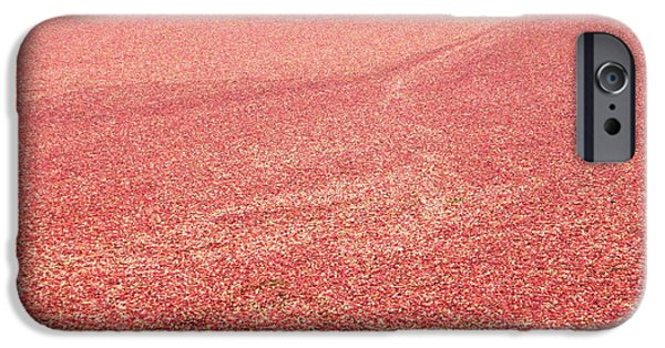 Newengland iPhone Cases - Cranberry Harvest iPhone Case by Andrea Anderegg