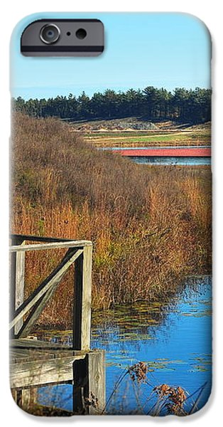 Cranberry Harvest  iPhone Case by Catherine Reusch  Daley
