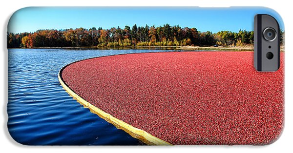 Floods Photographs iPhone Cases - Cranberry Harvest in New Jersey iPhone Case by Olivier Le Queinec