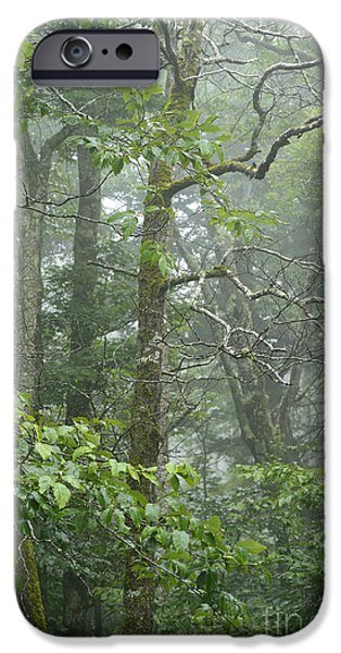 West Fork iPhone Cases - Cranberry Wilderness Mist iPhone Case by Thomas R Fletcher
