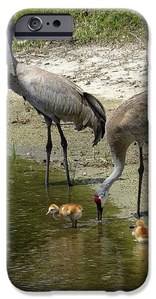 Cranes in the lake iPhone Case by Zina Stromberg