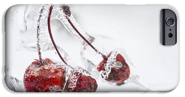 Winter Storm iPhone Cases - Crab apples in ice iPhone Case by Elena Elisseeva