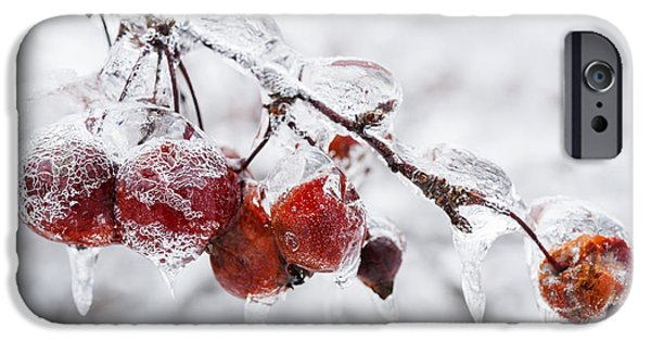 Berry iPhone Cases - Crab apples on icy branch iPhone Case by Elena Elisseeva