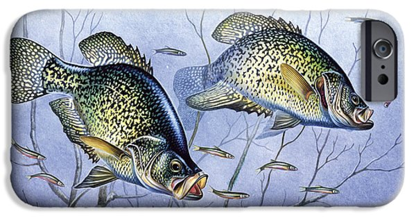 Tackle iPhone Cases - Crappie Brush Pile iPhone Case by JQ Licensing