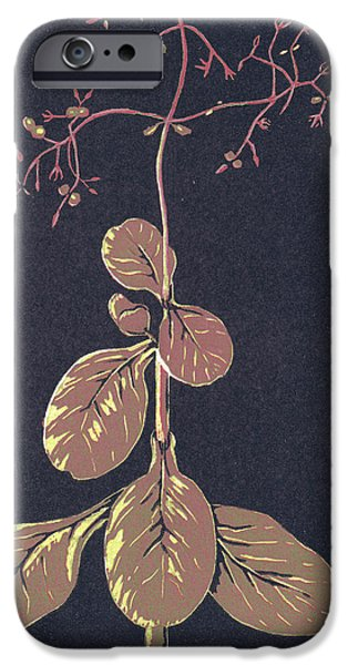 Lino Drawings iPhone Cases - Crassula Multica Va iPhone Case by C L Mvuku
