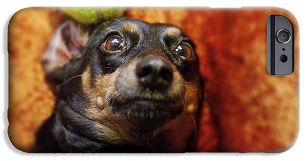 Lazy Dog iPhone Cases - Crazy Daschund iPhone Case by Angel  Tarantella