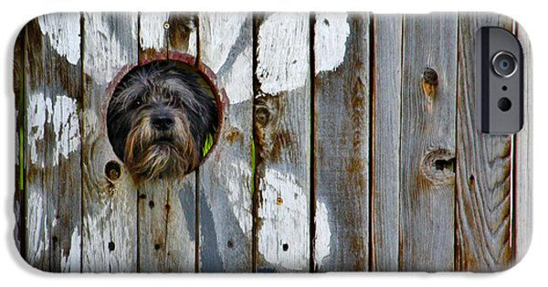Doghouse iPhone Cases - Creative Dog Fence iPhone Case by Janice Rae Pariza