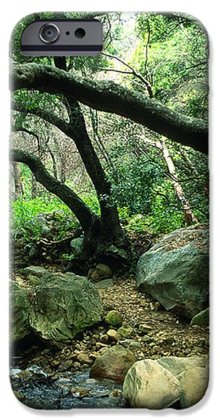 Creek in Woods iPhone Case by Kathy Yates