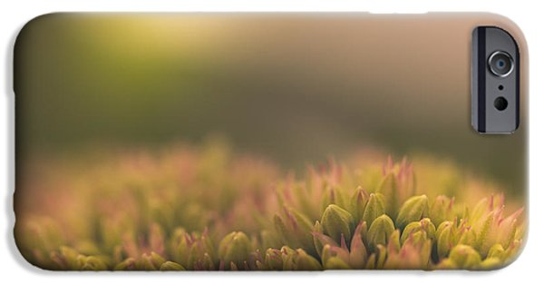Plants iPhone Cases - Crepuscle iPhone Case by Shane Holsclaw