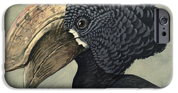 Ethiopia iPhone Cases - Crested Hornbill iPhone Case by Louis Agassiz Fuertes
