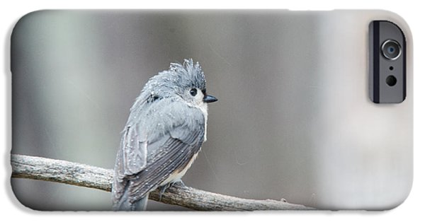 Tufted Titmouse iPhone Cases - Crested Titmouse iPhone Case by Douglas Barnett
