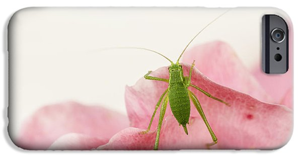 Cut-outs iPhone Cases - Crickets - Gryllidae iPhone Case by TouTouke A Y