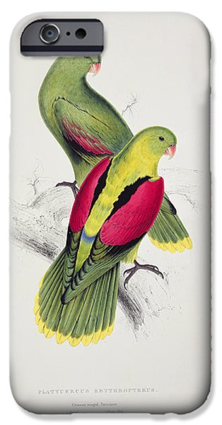 Audubon iPhone Cases - Crimson Winged Parakeet iPhone Case by Edward Lear