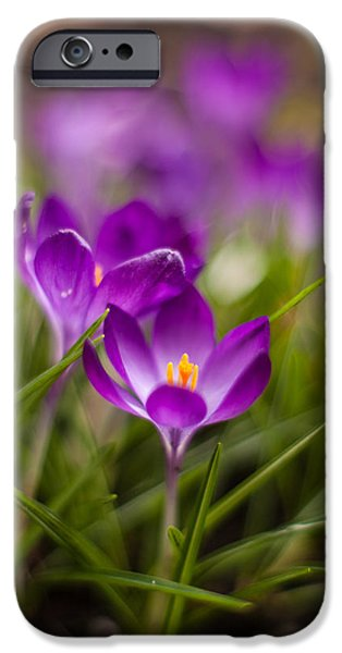 Thin iPhone Cases - Crocus Blooms Spring Garden iPhone Case by Mike Reid