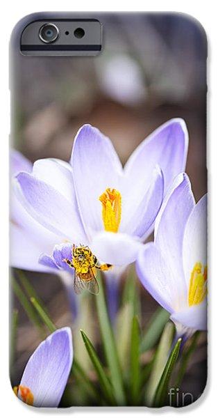 Crocus iPhone Cases - Crocus flowers and bee iPhone Case by Elena Elisseeva
