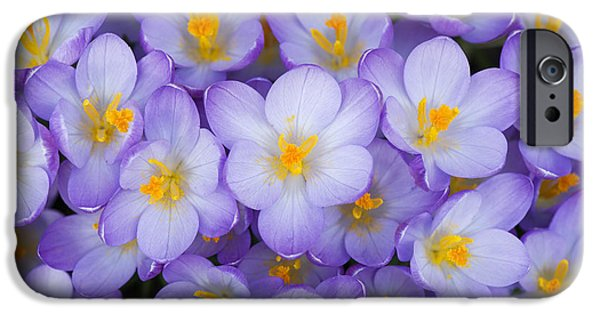 Yellow Ochre iPhone Cases - Crocus Vernus Queen of the Blues  iPhone Case by Tim Gainey