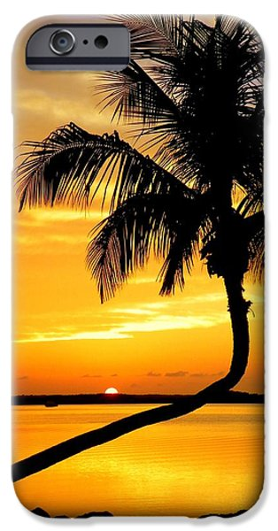 Karen Wiles iPhone Cases - Crooked Palm iPhone Case by Karen Wiles