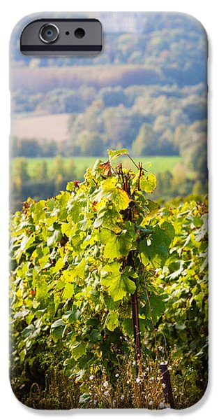 Crops iPhone Cases - Crops In A Vineyard, Chigny-les-roses iPhone Case by Panoramic Images