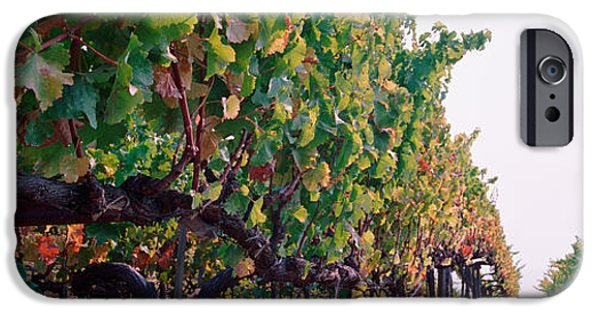 Crops iPhone Cases - Crops In A Vineyard, Sonoma County iPhone Case by Panoramic Images