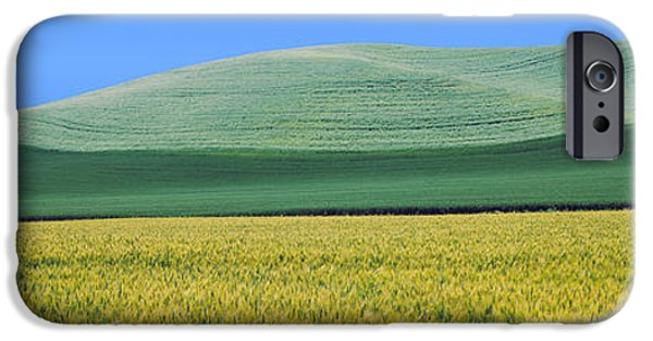 Crops iPhone Cases - Crops In Fields, Palouse, Whitman iPhone Case by Panoramic Images