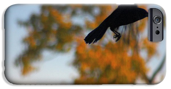 Crows iPhone Cases - Crow In Flight 3 iPhone Case by Gothicolors Donna Snyder
