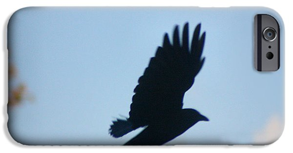Crows iPhone Cases - Crow In Flight 5 iPhone Case by Gothicolors Donna Snyder