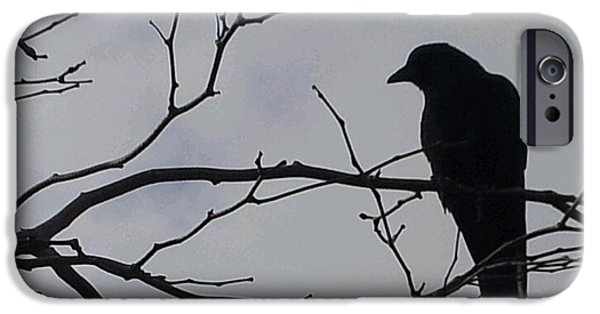Crows Pyrography iPhone Cases - Crow iPhone Case by Marcie  Griffin