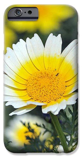 Crown daisy flower iPhone Case by George Atsametakis