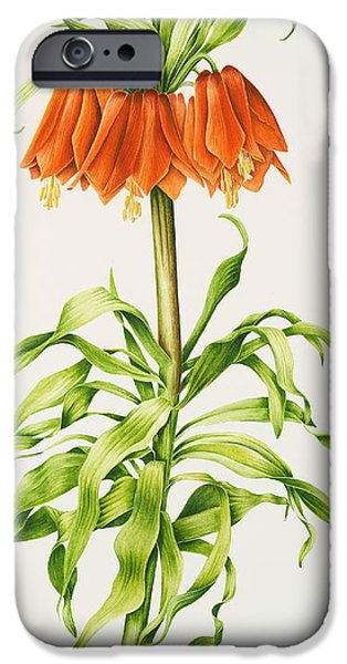 Crown iPhone Cases - Crown Imperial Fritillary iPhone Case by Sally Crosthwaite