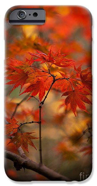 Reds Of Autumn iPhone Cases - Crown of Fire iPhone Case by Mike Reid