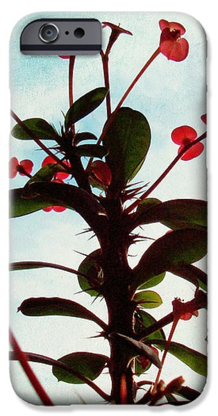 Crown of Thorns iPhone Case by Shawna  Rowe