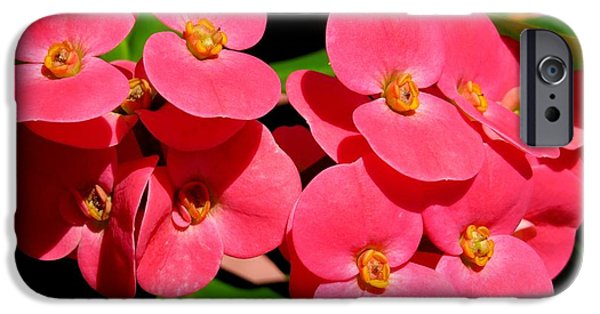 Floral Photographs iPhone Cases - Crown of thorns iPhone Case by Zina Stromberg