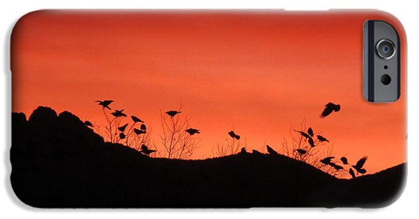 Crows Pyrography iPhone Cases - Crows at sunrise. iPhone Case by Cindy Daly