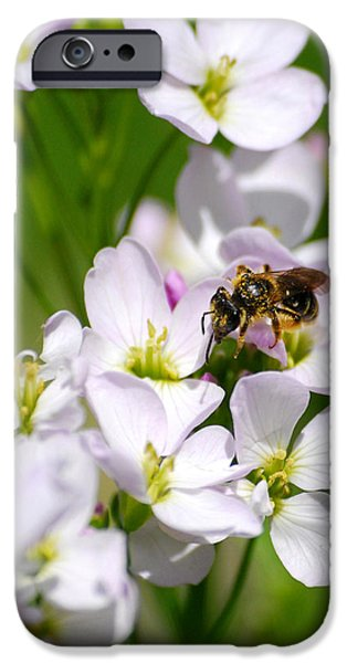 Cuckoo iPhone Cases - Cuckoo Flowers iPhone Case by Christina Rollo