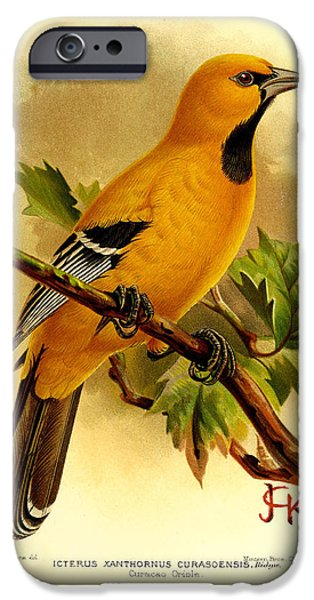 Oriole iPhone Cases - Curacao Oriole iPhone Case by J G Keulemans