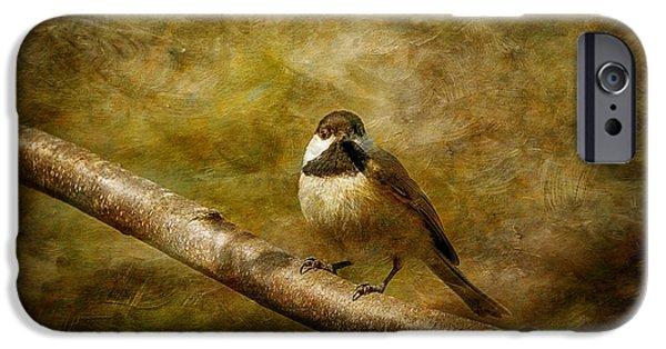Birds On Limbs iPhone Cases - Curiosity iPhone Case by Lois Bryan