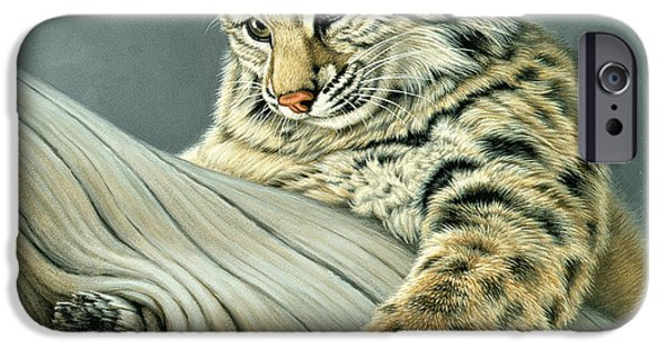 Bobcats iPhone Cases - Curiosity - young bobcat iPhone Case by Paul Krapf