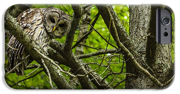 Hooters iPhone Cases - Curious Barred Owl iPhone Case by Thomas R Fletcher
