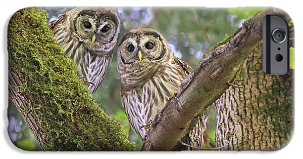 Barred Owl iPhone Cases - Curious Barred Owlets iPhone Case by Jennie Marie Schell