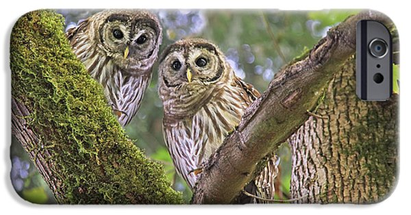 Baby Bird iPhone Cases - Curious Barred Owlets iPhone Case by Jennie Marie Schell