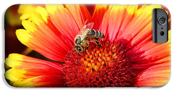 Fauna iPhone Cases - Curious Bee iPhone Case by Mariola Bitner