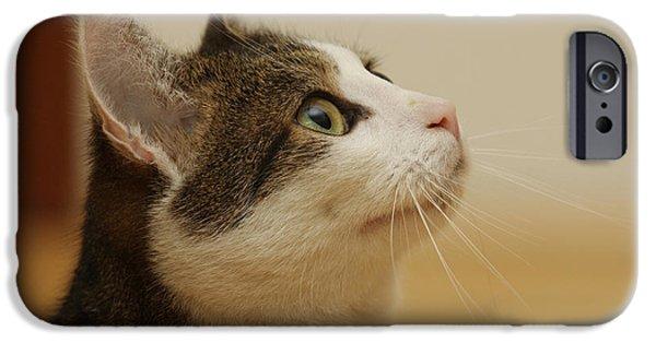 Domestic Short Hair Cat iPhone Cases - Curious Cat iPhone Case by Brinkmann/Okapia