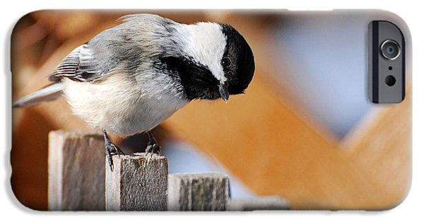 Chickadee iPhone Cases - Curious Chickadee iPhone Case by Christina Rollo