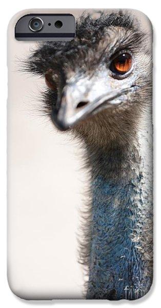 Emu iPhone Cases - Curious Emu iPhone Case by Carol Groenen