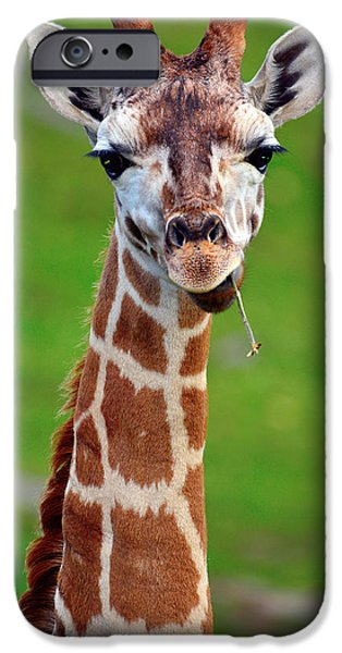 Cut-outs Mixed Media iPhone Cases - Curious giraffe iPhone Case by Toppart Sweden