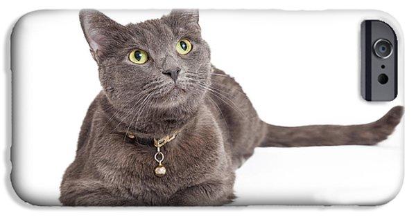 Domestic Short Hair Cat iPhone Cases - Curious Grey Domestic Shorthair Cat Looking Up iPhone Case by Susan  Schmitz